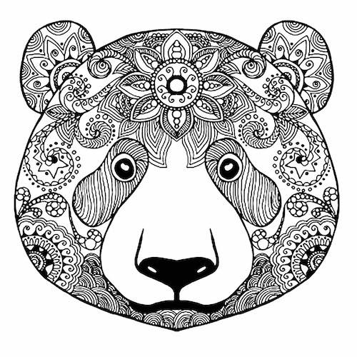 pomerania cara de oso venta